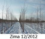 Zima 12-2012